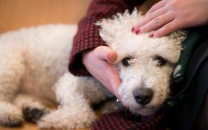 pet beverement leave